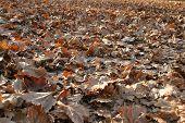 Foliage carpet