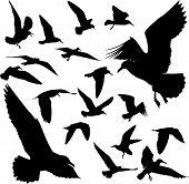 Algumas silhuetas de gaivotas voando