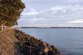 Auckland Forshore