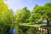 Spring Nature Scene. Beautiful Landscape. Park With Blossoming Chestnut Trees, Green Grass, River Ba poster