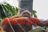 The Text Wildlife On The Broken Glass. The Background Is Slightly Blurred. Wildlife Conservation Con poster