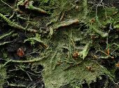 image of dick  - root tumbled tree in dick wood cover moss - JPG