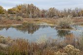 gravel pit converted into natural area - Riverbend Ponds, Fort Collins, Colorado in late fall scener
