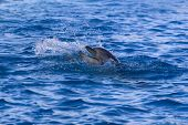 Dolphin in the sea