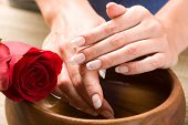 stock photo of french manicure  - Beautiful fingers with French manicure and red rose - JPG