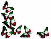 Kuwaiti Flag Butterflies, Isolated On White Background