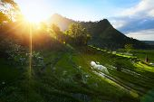Rice fields on hills of a mountains at sunset. Bali. Indonesia