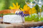 Lavender And Camembert