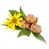 image of jerusalem artichokes  - Jerusalem artichoke with flower and leaves stem isolated on a white background - JPG
