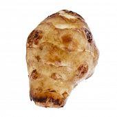 Única alcachofra de Jerusalém.  Helianthus tuberosus. close-up isolado em um fundo branco