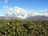 Clouds And Vineyard Tops