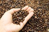 Kaffeebohne In der Hand