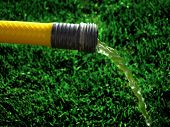 Yellow hose with water spraying on green grass