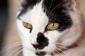 picture of 24th  - A picture of a pet cat taken on 24th August 2008 - JPG