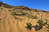 Spring Flowers In The Desert