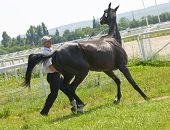 Cavalo desobediente.