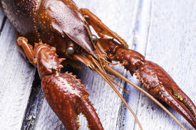 stock photo of crawdads  - Extreme close up view of a cooked crawdad - JPG
