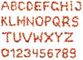 Letters and numbers alphabet of red ripe strawberries