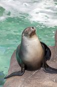 Close up photography of sea lion