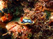 foto of cebu  - Underwater inhabitants of sea depths of strait Cebu - JPG