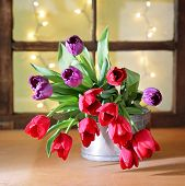 tulips on a wooden board in front of a window pane with bokeh shining through. good for mother's day, easter, valentine's day or other holidays symbolizing love