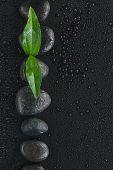 Black Stones And Leaf  Lie On A Wet Black Background
