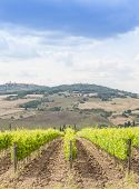 Tuscan Wineyard