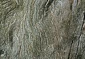 Olive Cortex