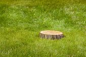 picture of disafforestation  - tree stump on the green grass - JPG