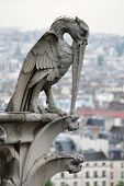 stock photo of gargoyles  - A carved stone bird gargoyle perched atop the roof of Notre Dame Cathedral in Paris France
