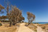 Dirt Paths By The Pacific Ocean With Trees