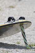 A Kitesurfboard In The Beach