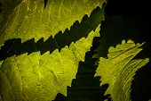 Contrasted green leaves pattern