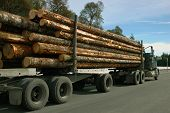 stock photo of logging truck  - Fully loaded logging truck on the way to mill - JPG