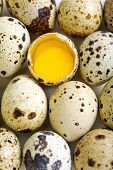 Colorful Quail Eggs.