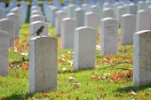 image of arlington cemetery  - Arlington National Cemetery in Autumn  - JPG