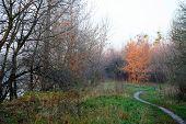 Autumn Landscape With Golden Tree