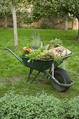 Closeup of a wheelbarrow full of vegetables on grass