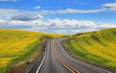 Scenic road through Rapeseed fields In eastern Washington state