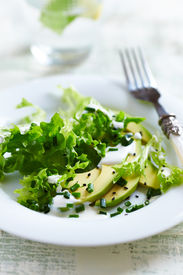 picture of endive  - Avocado and Endive Salad with Yogurt Dressing - JPG
