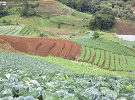 picture of cruciferous  - Farmland hills ladder cruciferous garden crops Valley area - JPG