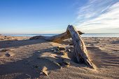 image of driftwood  - A piece of driftwood laying on the beach - JPG