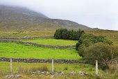 foto of galway  - Pasture in the National park Connemara - JPG