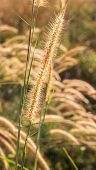 Close Up Image Of Yellow Wild Grass Flowers