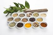 large collection of different spices and herbs isolated on white background