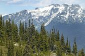 Whistler Landscape With Forest And Mountains. British Columbia. Canada
