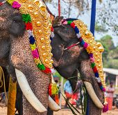 image of hindu temple  - Decorated elephants in Hindu temple at temple festival - JPG