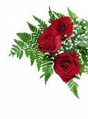 Three red roses on a fern leaf with tiny white flowers