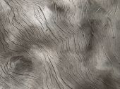 Burl Wood Surface