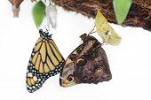 Butterflies were born from cocoons